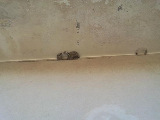 Hotel Essen: nido di non so cosa sopra al balcone