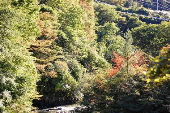Yamagatakan : 秋の渓谷
