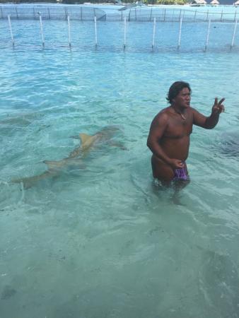 Bora Bora Lagoonarium: Un posto unico dove abbiamo nuotato tra squali e mante! In una vasca sono presenti anche due bel