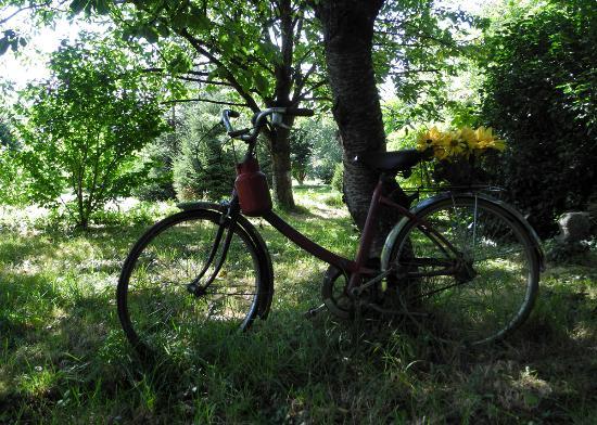 L'Angeviniere - Gites et Chambres D'Hotes : Recoins de jardin insolites, aussi...
