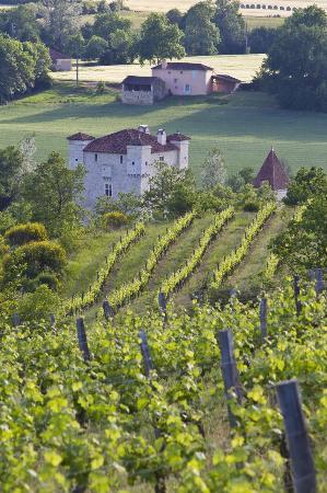 Auch, Frankrike: Le domaine de Herrebouc, vu de ses vignes