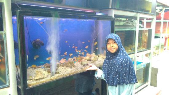 Pusat Promosi Ikan Hias Sumenep