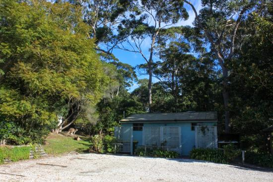 Hyams Beach Seaside Cottages: The back of the parking with kangaroos