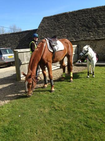 The Horse Guards: Spike and Diva enjoying lunch in the garden!