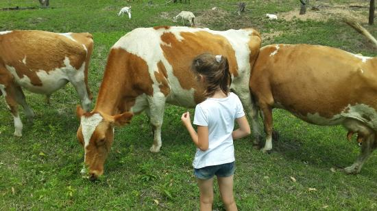 Most friendly animals! Kids really enjoyed it a lot  A must