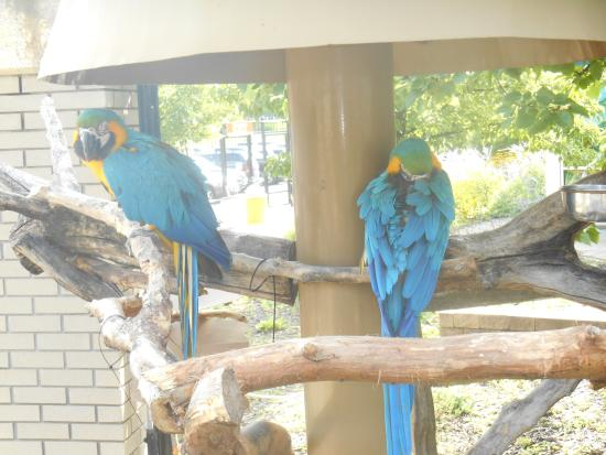 Children's Zoo at Celebration Square: Parrots at Saginaw Zoo