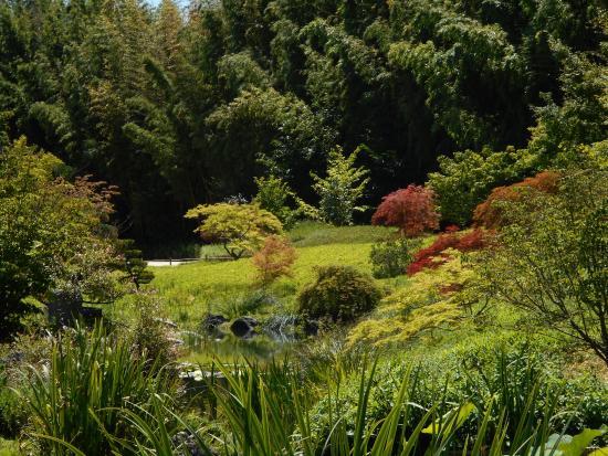 la jardinerie de la bambouseraie obr zek za zen la bambouseraie en c vennes generargues. Black Bedroom Furniture Sets. Home Design Ideas
