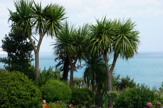 Deck Tea Gardens at Carlton Hotel: Garden view