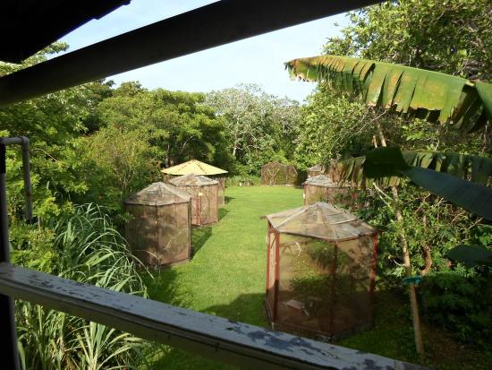 Iguana Research & Breeding Station : The iguana enclosures