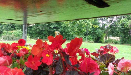 Ben's Organic Farm Shop and Cafe: Lots to look at and purchase