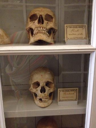 Musée De L'Ecole De Médecine Navale : Splendide bibliotheque, très belles collections