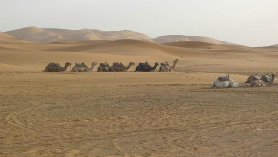 Sahara Garden: View on the camels and the desert