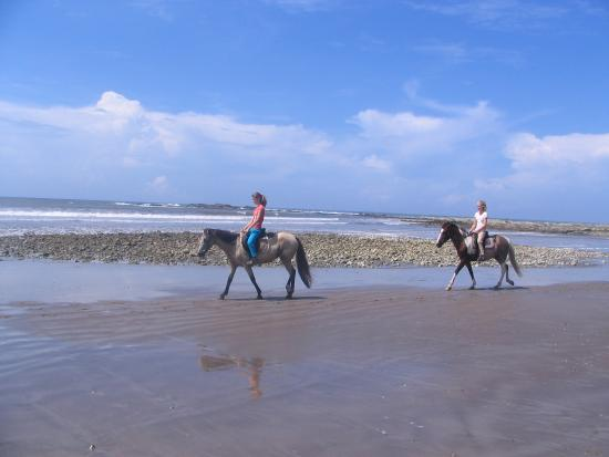 Horsejungle: relax op strand