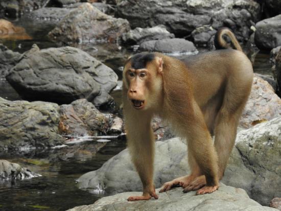 Tabin Wildlife Resort: Local Wildlife