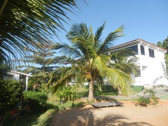 Posada Casa Las Trinitarias: el cocotero central