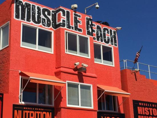 salle de musculation picture of venice beach los angeles tripadvisor. Black Bedroom Furniture Sets. Home Design Ideas