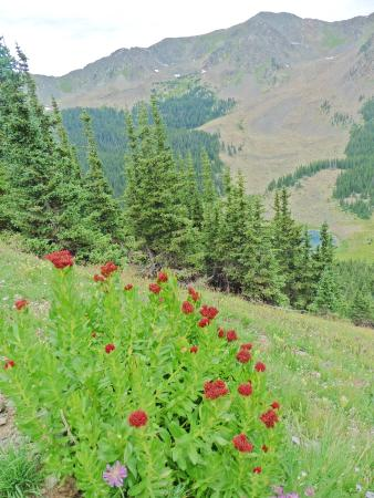 Wheeler Peak: Trail #62