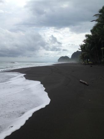 Black Sand Beach View From The Restaurant Picture Of Backyard Bar