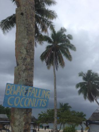 Falealupo Beach Fales: Plenty of palm trees for shade