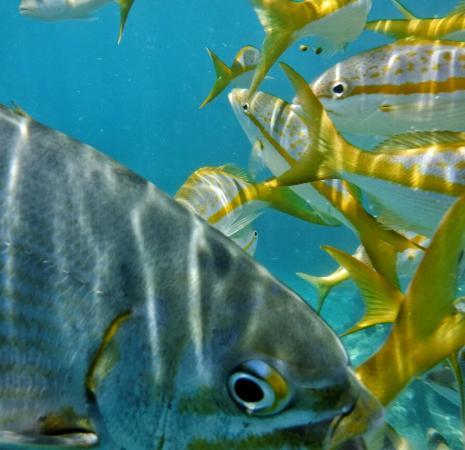 Starfish Snorkeling