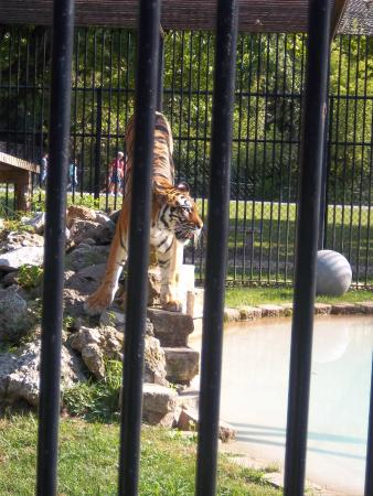 Coal Valley, IL: Niabi Zoo, Coral Valley, IL