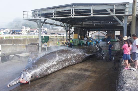 Wadaura: 鯨の解体