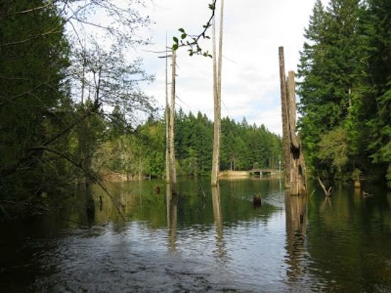 Nanaimo, Kanada: Partly submerged dead trees in  the lower Dam