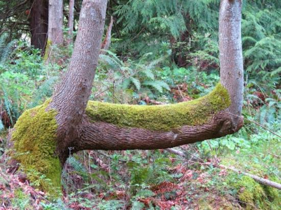 Nanaimo, Kanada: Inviting branch to sit on