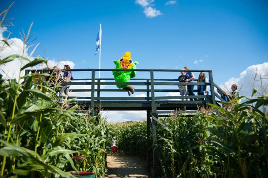 The Milton Maize Maze - open each Summer in July & August
