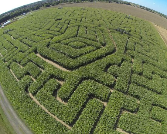 The Milton Maize Maze
