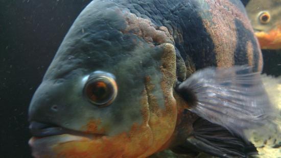 ... fish - Bild fr?n Aquarium Wasserbillig, Wasserbillig - TripAdvisor