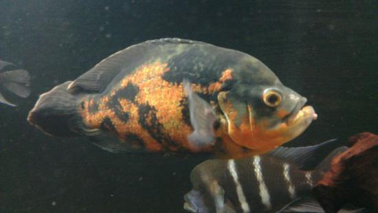 Wasserbillig Aquarium : ... fish - Bild fr?n Aquarium Wasserbillig, Wasserbillig - TripAdvisor
