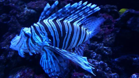 ... fish - Picture of Aquarium Wasserbillig, Wasserbillig - TripAdvisor
