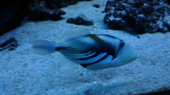 Aquarium Wasserbillig - Bild von Aquarium Wasserbillig, Wasserbillig ...