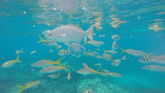 Spirit Snorkeling Fish At Sombrero Reef