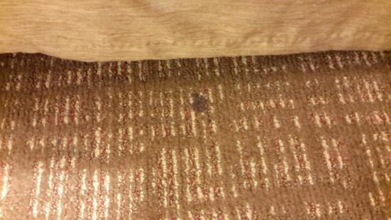 Courtyard Mississauga-Airport Corporate Centre West: bedside carpet photo