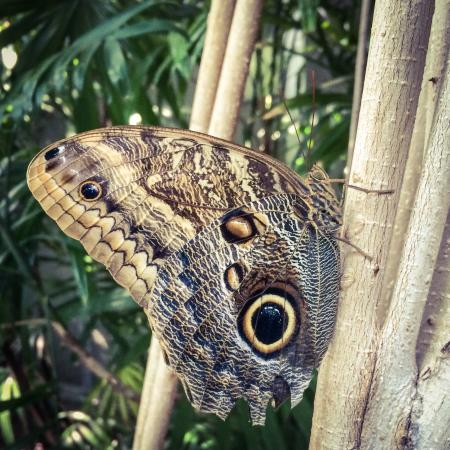Sachs Butterfly House : photo1.jpg