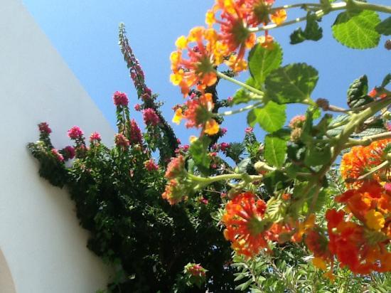 Gerani Sifnos Suites: en regardant le ciel depuis ma chaise longue dans le jardin