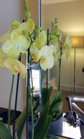 The Angel: orchid in room