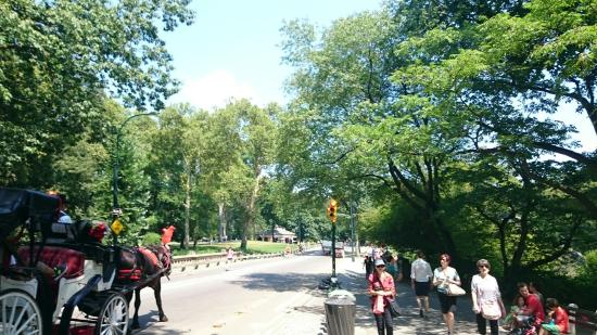 Central Park Horses-Day Tours