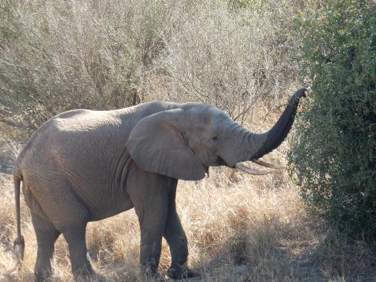 Garonga Safari Camp: At the watering hole
