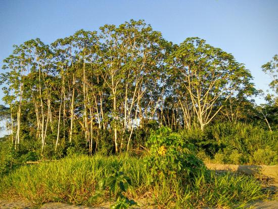 Ecoamazonia Lodge Picture