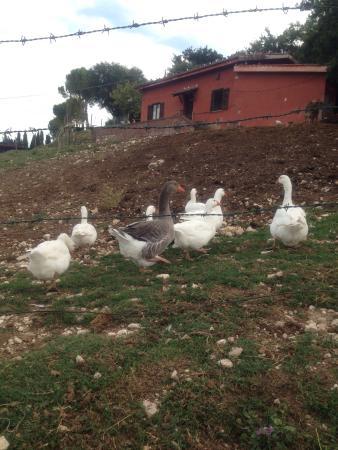 Agriturismo La Cerra: photo0.jpg