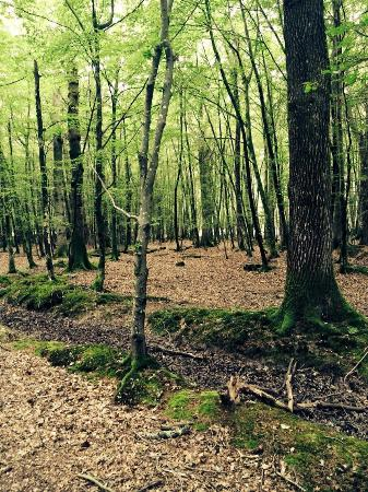 Ashurst Campsite: Deeper into the forest