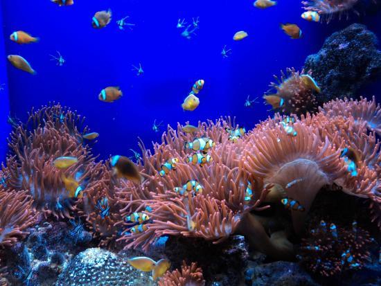 Pesci picture of acquario di genova genoa tripadvisor for Pesci e acquario