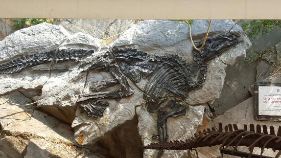 Sito Paleontologico Dinosauro Antonio