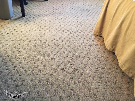 Holiday Inn Express Prince Frederick: torn carpet ( why ) have some pride in your hotel !!!