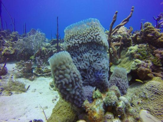 Scuba Diving Picture Of Majestic Colonial Punta Cana Bavaro Tripadvisor