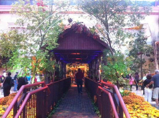 Bellagio Botanical Garden Christmas Time Picture Of Conservatory Botanical Gardens At