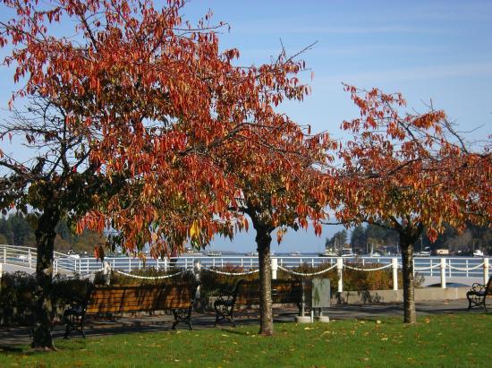 Nanaimo, كندا: Autumn leaves near the Swy-a-lana Lagoon